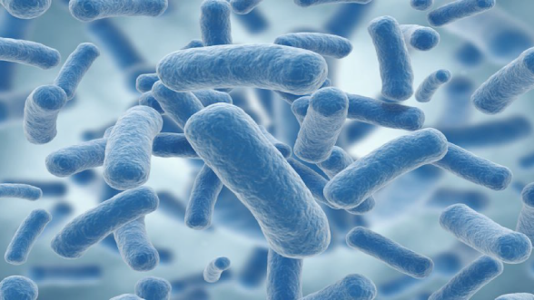 Sexual Behavior and Microbiome