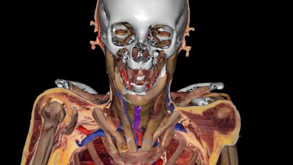 Virtual human Susan Potter